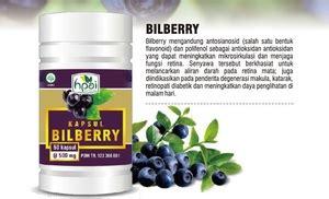 Bilberry Hpai Herbal Kesehatan Mata bilberry reseller penyembuhan herbal sms wa 0896 6145 8036