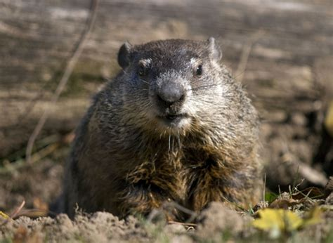 groundhog day up why groundhog day should be a tune up day