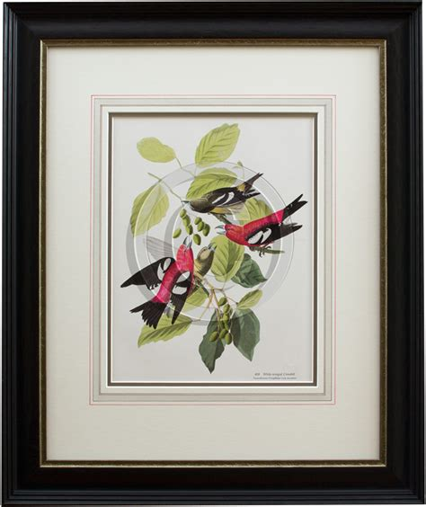 Matting A Print by Framed Botanical With Mat Exle