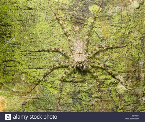 spider on tree stock photos spider on tree stock images