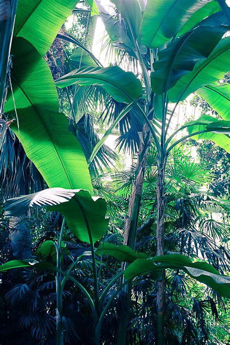 serre jardin des plantes les grandes serres du jardin des plantes paris planb