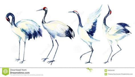 watercolor asian crane bird set stock illustration image