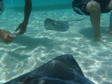 boat rental from miami to bimini things to do in bimini bahamas sailo boat rental bimini