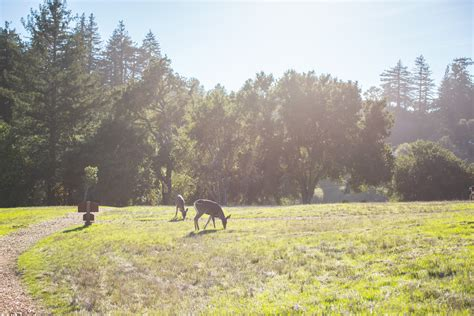 training active ranch fitness active travel holiday luxury big sur post ranch