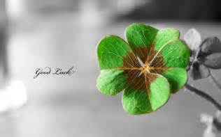 luck screensavers 12 lucky st patty s day backgrounds