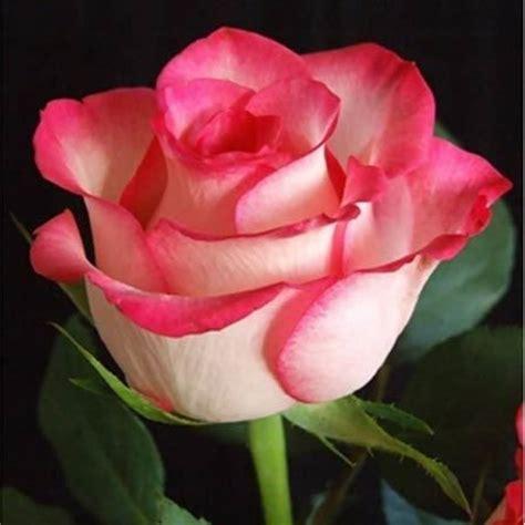 most popular flower 50 plus belles fleurs du monde