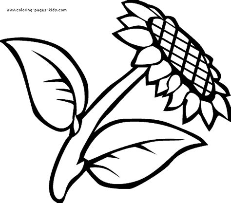 coloring flowers with food color free printable sunflower picture
