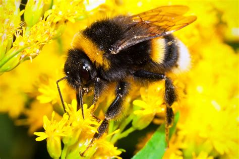 Search For On Bumble How To Discourage Bees Into Your Garden The Garden