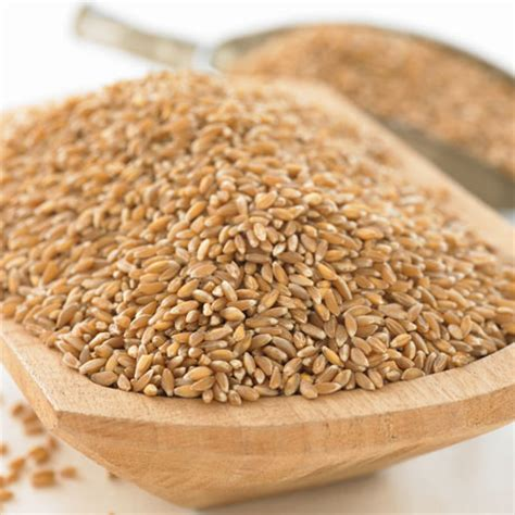 1 lb whole grains whls organic whole grain emmer farro 1lb units of 6