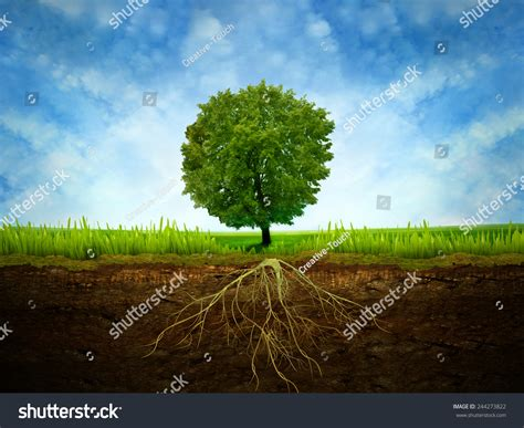 section of tree section soil showing root tree stock photo 244273822