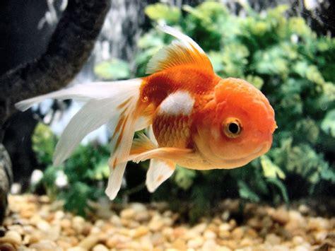 best nano fish tank best nano aquariums in 2018 reviews fish tank advisor