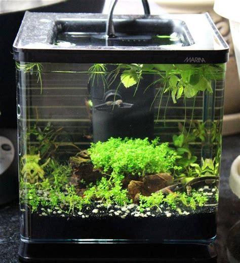 Lu Aquarium Mini 430 best aquarium vivarium paludarium images on fish aquariums fish tanks and aquariums