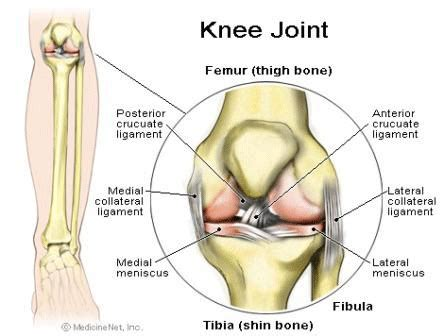 parts of knee diagram bones the knee doc