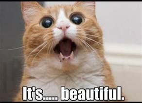Cute Funny Cat Memes - xamarin evolve 2016 cellenza blog