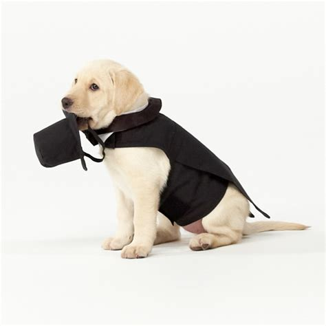 puppy tuxedo wedding tuxedo wedding clothes