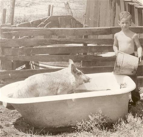 pig in bathtub picture picks winners gallery the classics that old