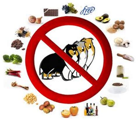 can you eat dogs while what foods are bad for dogs 8 foods dogs should not eat
