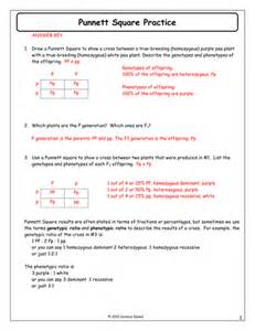 monohybrid punnett square worksheet abitlikethis