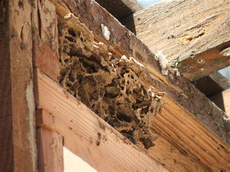 termite custom woodworks day 2 termite nest flickr photo