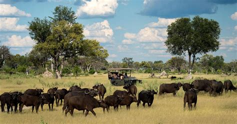 Big Picture Post Nation 5 by Chobe Big Five Safari Wildlife In Botswana S Greatest