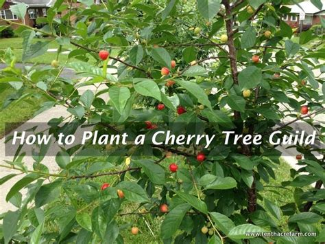 permaculture guilds fruit trees 17 best images about permaculture landscape design on
