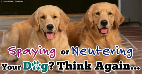 when can a puppy be spayed pets n more spaying or neutering your think again