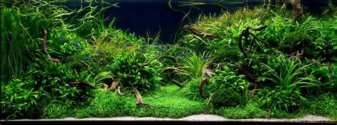aquascape freshwater aquarium marcel dykierek and aquascaping aqua rebell