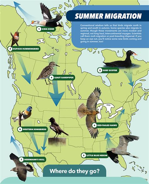 america bird migration map these 8 migration routes give you reason to go