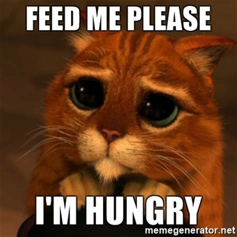 Hungry Memes - feed me please i m hungry shrek cat v1 meme generator