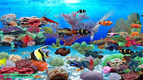 wallpaper aquarium mac aquarium animated wallpaper for mac