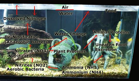 Do I Need To Cycle Tank If I Detox It by 20 Gallon Tank Nitrogen Cycle The Nitrogen Cycle The