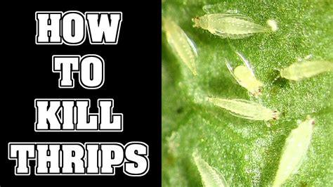 kill thrips pests   garden youtube