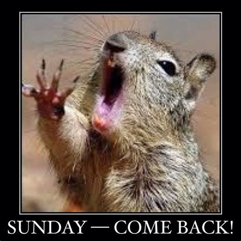 Sunday Meme - happy sunday love quotes images and funny meme hug2love