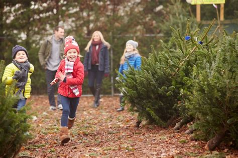 where to buy a tree 5 tree farms in central arkansas rock