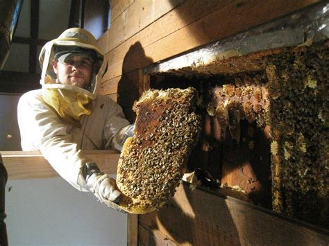 how to get rid of a beehive in your backyard wasp removal