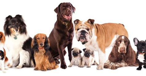 types of dogs and their personalities quiz what breed of matches your personality