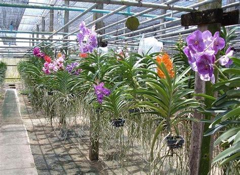 orchidea linguaggio dei fiori linguaggio dei fiori orchidea significato fiori il