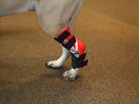 luxating patella brace luxating patella brace for dogs images