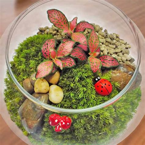 indoor plants singapore singapore indoor plants table garden mini plants flowers and plants