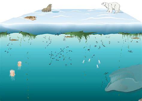 interactives : oceanus magazine