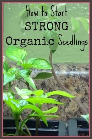organic gardening affiliate programs organic seed starting supplies and tips homestead