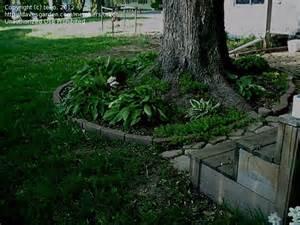 Landscape Edging Around Tree Roots Beginner Gardening Pine Tree Roots 1 By Teko