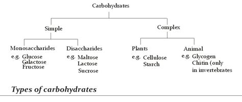 carbohydrates names chemical composition biological functions and types of