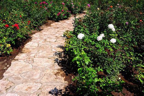 cespugli per giardino cespugli fioriti per giardino gallery of arbusti e