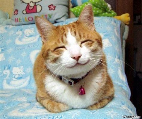 Happy Cat Minkas 1 5 Kg Poultry happy cat 1funny
