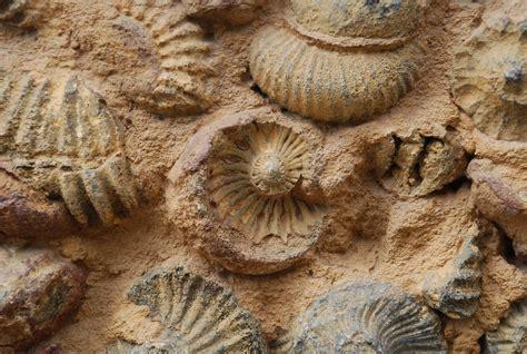 imagenes de fosiles 301 moved permanently