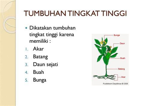 tumbuhan tingkat tinggi contoh soal  pembahasan