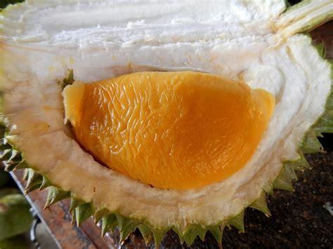 raub durian orchard mrchong   hakka friends visit