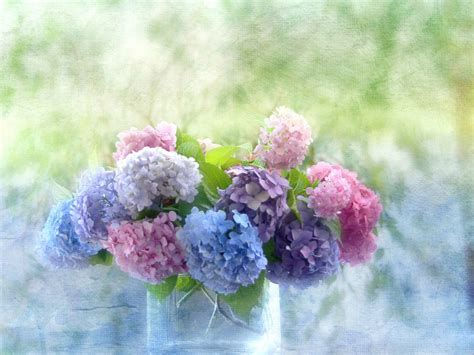 beautiful hydrangea flowers in a vase wallpapers and