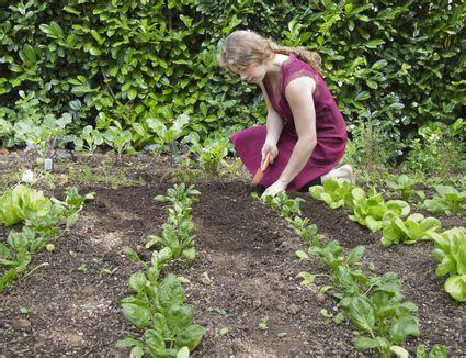 starting an organic vegetable garden how to start an organic vegetable garden